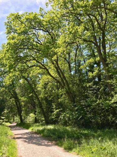 k-19-2019-06-Radltour-Forstenrieder-Park
